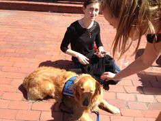 Therapy Dogs Comfort Boston