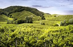 A breathtaking view of the #Prosecco #hills around #CastelBrando. The beauty of the #nature meets the know-how of the #farmers to create an excellent #wine.