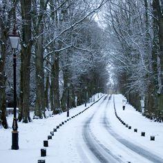 Winter Avenue, Scotland, via Flickr