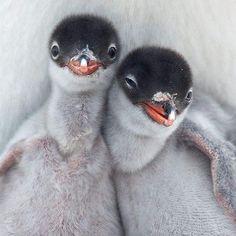 ** Penguin