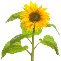 Sunflower http://golfdriverreviews.mobi/traffic8417/ Robert Garrigus (born November 11, 1977) is an American professional golfer who is currently a member of the PGA Tour.
