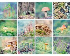 Hey, I found this really awesome Etsy listing at https://www.etsy.com/listing/167279082/forest-floor-mini-portfolio-nature