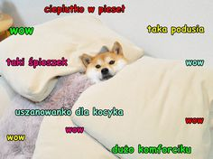 Katerdogen meme shiba inu lustig - Raining cats and doges - Kleinkind Funny Doge, Doge Meme, Funny Dog Memes, The Funny, Shiba Inu Funny, Bad Pun Dog, Much Wow, Cute Dog Photos, Stay In Bed