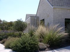 texas landscape plants | The texture of a Lindheimer Muhly grass stands out within a mass of ...
