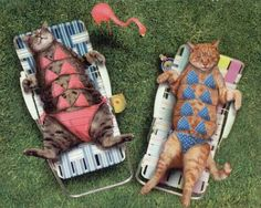 Funny cats in bikinis having sunbath