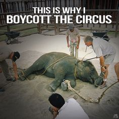 it's not because I don't like to be entertained under the big top, it's because I don't want to support animal abuse. The Animals, Wild Animals, Peta, Stop Animal Cruelty, Animal Protection, Faith In Humanity, Animal Welfare, Animal Rights, Wildlife
