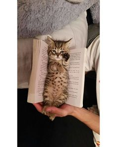 Favourite Bookmark – May 2016 – We Love Cats and Kittens Favoris favori – 6 mai 2016 – Nous aimons les chats et chatons Cute Cats And Kittens, I Love Cats, Crazy Cats, Kittens Cutest, Kitty Cats, Cute Kitten Pics, Kittens Meowing, Kitten Images, Baby Kitty