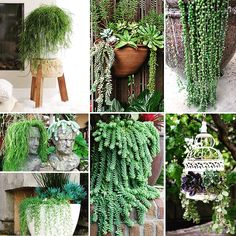 There are many different types of hanging succulent plants that are easy to care for and do not require watering as often as other hanging plants.