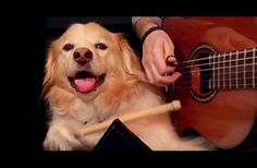 This just made my DAY.  XD   WATCH: When His Owner Plays Guitar, This Pup Does The Most Hilarious Thing