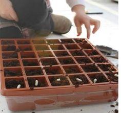 Start Seeds Indoors: Fun For Little Fingers