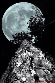 Full Moon up the tree. - by Mike Finn Photography