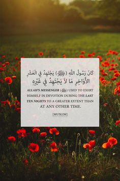 Allah Quotes, Quran Quotes, Islamic Quotes, Hindi Quotes, All About Islam, Allah Love, Imam Ali, Quran Verses, Hadith