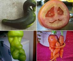 Yes, even the ones that look like peens. Weird Fruit, Funny Fruit, Strange Fruit, Weird Food, Funny Food, Funny Vegetables, Growing Vegetables, Fruit And Veg, Fruits And Vegetables