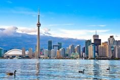Toronto oder Montreal?