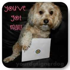 Get Creative with Jolly Awesome Pet Tags! - YourDesignerDog