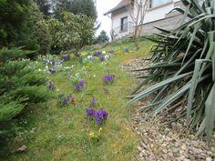 Zahrada s jarními kvítky