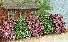 Kríkové rastliny na živé ploty
