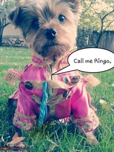 Ringo from The Beatles Sgt. Pepper's Lonely Hearts Club Band - Halloween Costume Contest via @costume_works