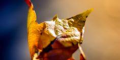 Fall Into the Flow: Mat Music by Kelynn - GatherYoga