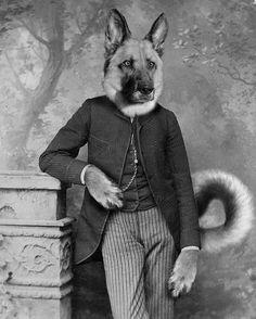 Photo illustration of Hans the German Shepherd