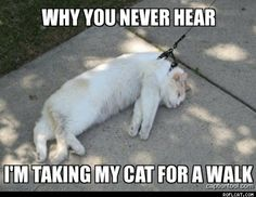 """Why you never hear """"I'm taking my cat for a walk"""""""
