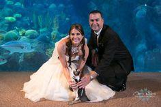 Penguin Wedding Guest! Aquarium Under the Sea Wedding!