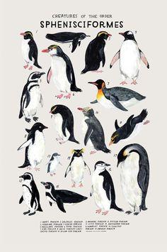 Creatures of the Order Sphenisciformes