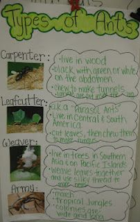 Type of Ants (poster) and many other teaching ideas on her blog. http://theteachingbug.blogspot.com/