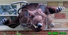Giant Mutant Window-Busting Animated Rat Prop Made this guy for Halloween in No glue gun sticks were harmed on the making of this prop. Halloween Creatures, Prop Making, Rodents, Rats, Halloween Ideas, House Ideas, Window, Animation, Windows