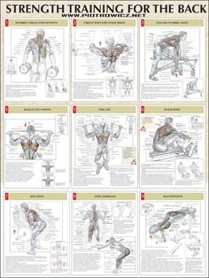 Strength Training For The Back - Fitness Healthy Exercise Gym