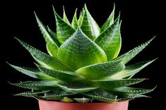 high heels Not all greenery is good: 10 hazardous houseplants to watch out for Amazing Gardens, Beautiful Gardens, Beautiful Flowers, Cactus Plante, Old Farmers Almanac, Day Lilies, Calla Lily, Diy Projects To Try, Houseplants