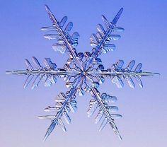 stellar dendrite snowflake photo