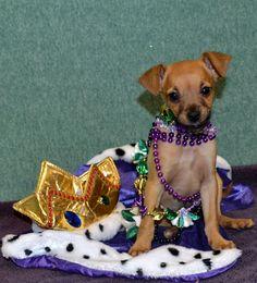 Helen Woodward Animal Center presents Doggie Gras Parade