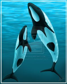 Commerson Dolphins, known also as skunk dolphins, piebald dolphins and panda dolphins.