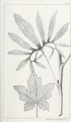 1 - Vegetable organography; - Biodiversity Heritage Library