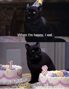 """17 Moments From """"Sabrina The Teenage Witch"""" That Are Seriously Funny Teenager Filme 17 Times """"Sabrina The Teenage Witch"""" Was Funnier Than We Remember Memes Humor, Cat Memes, Funny Memes, Cats Humor, Memes In Real Life, Real Life Quotes, Funny Quotes About Life, Salem Sabrina, Sabrina Cat"""