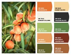 Peachy color pallet for fall