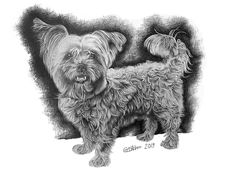 A dog portrait in pencil makes the perfect birthday gift or any other gift. So why not consider a dog portrait in pencil as your next present