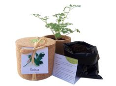 Grow cork Life in a bag Coriander, Parsley, Cork, Planter Pots, Herbs, Bags, Life, Portuguese, Portugal
