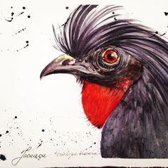 Jacu - bird of Brazil watercolor by Cláudia Garcia