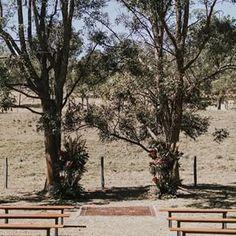Un mariage à la montagne Ceremony Backdrop, Backdrops, Wedding Photography, Plants, Mountain, Photography, Backgrounds, Plant, Wedding Photos