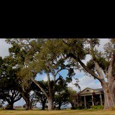 Twelve Oaks Plantation B&B; Houma, LA... love this place, so pretty!
