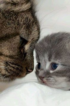 Mother cat with her kitten in cutest picture ever