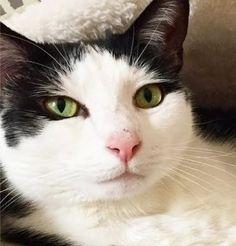 Cat Learns To Open Door To Meet New Foster Kittens