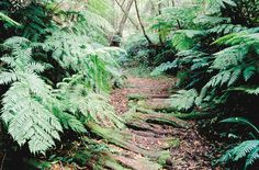 Circles in the Forest (Knysna) - 2020 All You Need to Know Before You Go (with Photos) - Knysna, South Africa Knysna, Old Trees, Lush Garden, Biomes, Beautiful Places To Visit, Hiking Trails, The Great Outdoors, South Africa, Trip Advisor