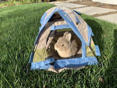 Bunny camp Source by rachaelpodolak Cute Baby Bunnies, Baby Animals Super Cute, Cute Funny Animals, Funny Cute, Cute Babies, Bunny Cages, Pet Rabbit, Animals And Pets, Bun Bun