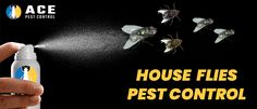 Take precautionary steps for house flies control and flies removal. Here is the ultimate guide for controlling house fly infestation and flies pest control. House Fly Infestation, House Fly Control, Get Rid Of Flies, How To Get Rid, Pest Control, Commercial, Industrial, Gallery, Roof Rack