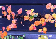 Day 66 - Autumn leaves through park bench