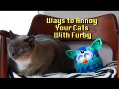 Ways to Annoy Your Cat #1. Our friend brought a Furby Boom to our house for a visit and the Furballs were not exactly friendly. Hopefully Tomorrow there will...