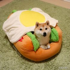 This has to count Japanese Dog Breeds, Japanese Dogs, Cute Baby Animals, Animals And Pets, Funny Animals, Shiba Inu, Cute Puppies, Dogs And Puppies, Pet Dogs